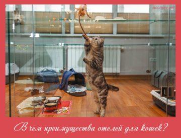 В чем преимущества отелей для кошек