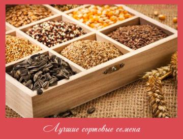 Лучшие сортовые семена