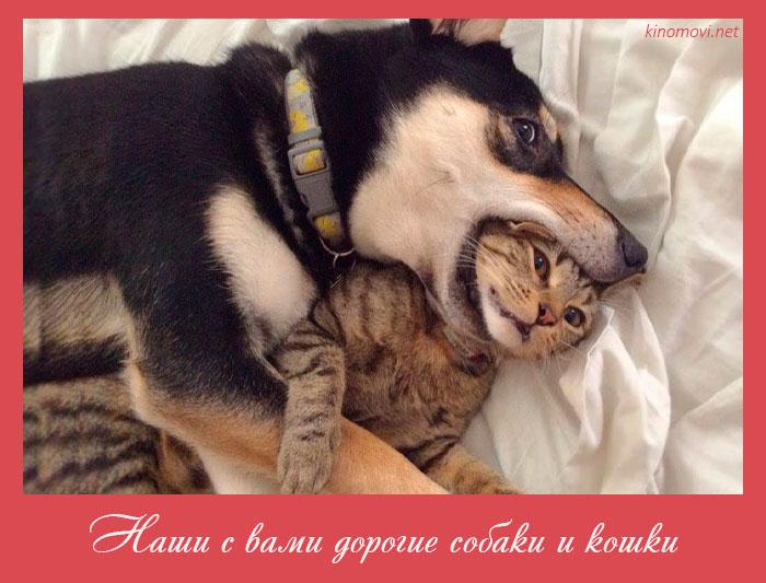 Наши с вами дорогие собаки и кошки